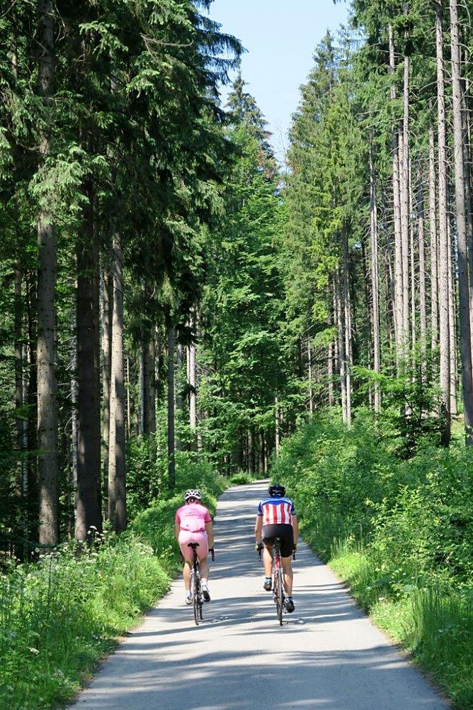 Wąskie asfalty w lesie - wizytówka Beskidów