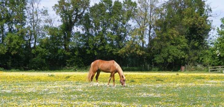 Horse Spring Grass