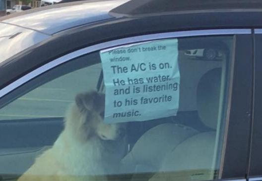 This Sign In Car Window With Dog Inside Goes Viral Good Idea