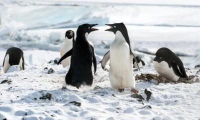 Penguins 4 pub