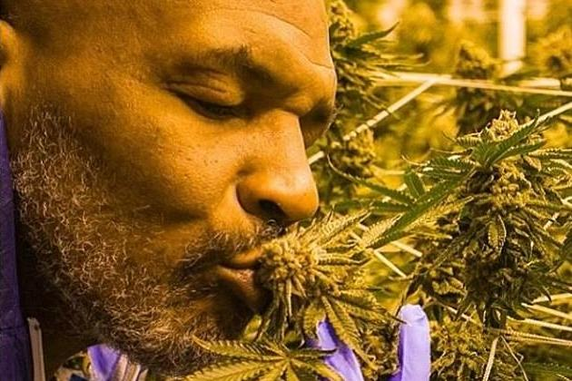 Image result for mike tyson marijuana