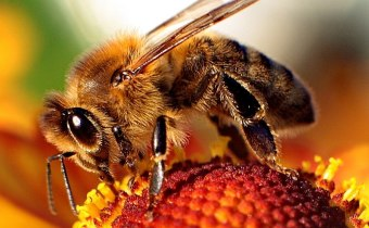 Beebread and royal jelly: you are what you eat?