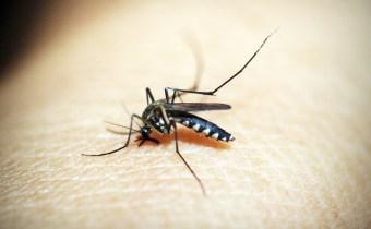 Advances in malaria vaccine development