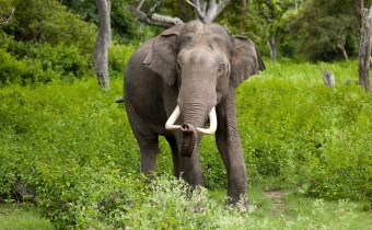 New weapons in the fight against the ivory trade