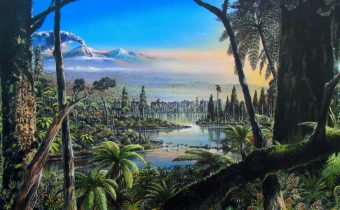Uncovering an ancient Antarctic rainforest