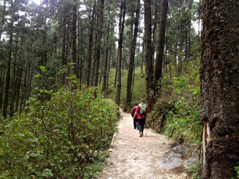 santuario-mariposa-monarca-caminho-na-floresta-eusouatoa