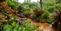 plan-a-tropical-garden-with-tropical-plant