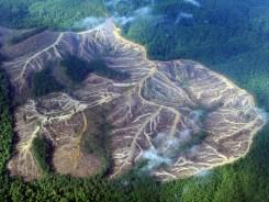 rainforest-deforestation