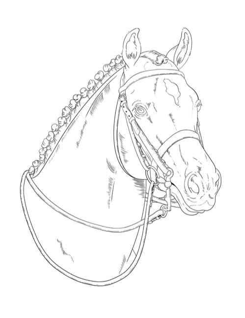 Dressage horse colouring page for teenagers
