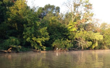 Egret Anacostia River 8.2015