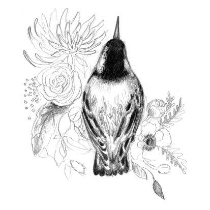 bird_antler