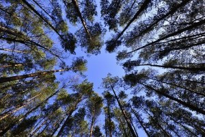 expert-forestier-isf