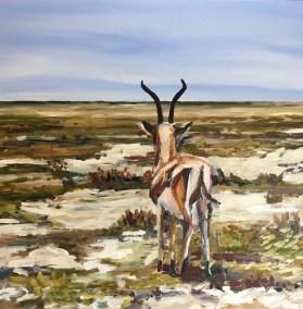 Gazelle (Kenya)