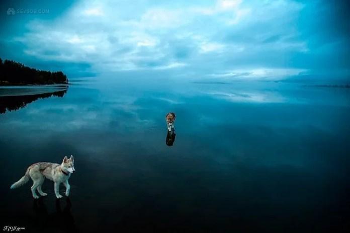 husky-paa-speilblank-is-02