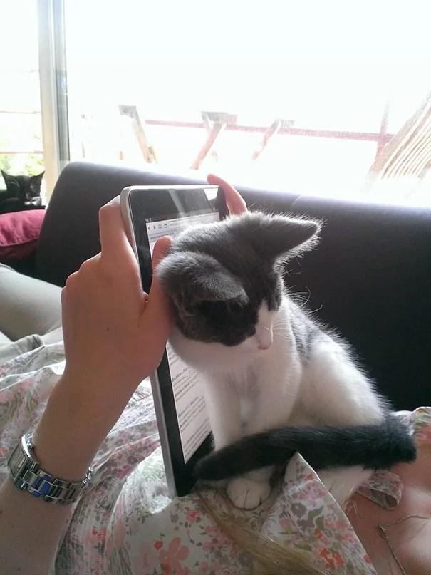 katter-og-intimsone-12