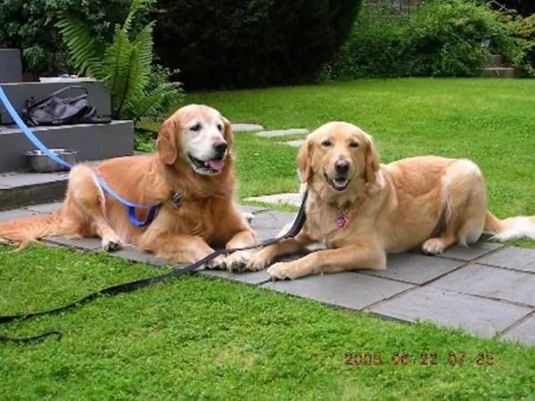 happy-ending-rescue-dog-alfie-11