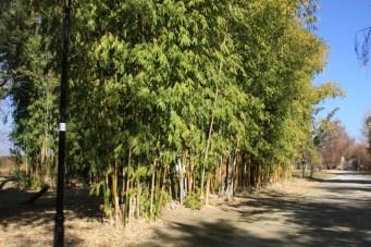 Camino de Bambú