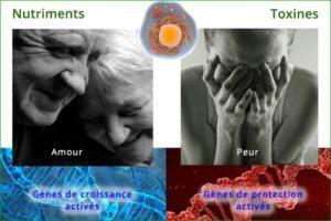 hp042_tableau-cairns-genes-adn-300x200
