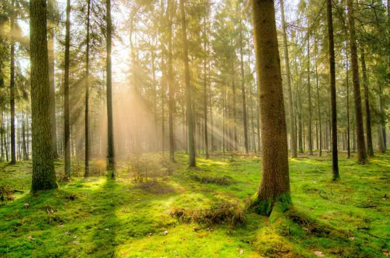 forest-fog-nature-landscape-1005334