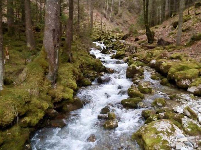 foret-ruisseau