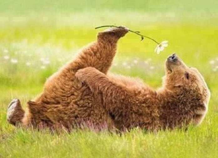 ours-printemps