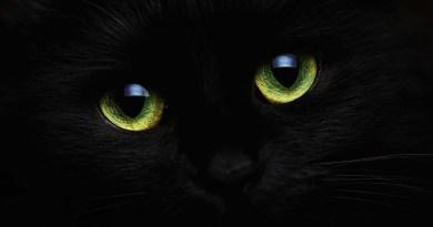Communication animale : message du peuple des Chats