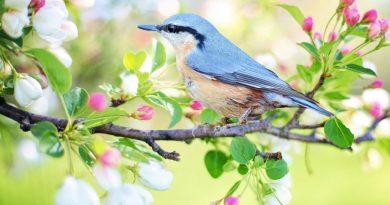 Contravirus ou la méditation de l'énergie du printemps