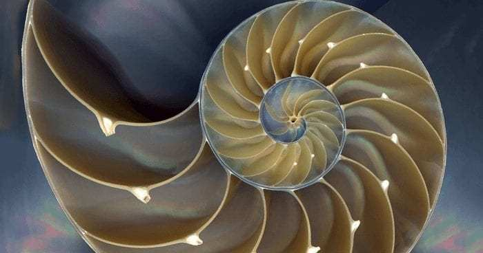 SacredGeometry-nautilus