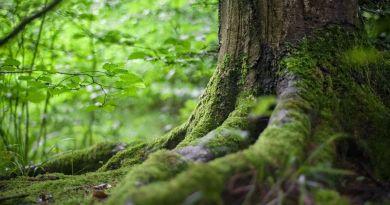 Pamela Kribbe canalise Terre Mère: L'inspiration de la Vie