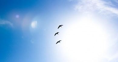 Une invitation à créer votre nouvelle réalité : Déploie tes ailes et vie la plénitude de ton être ! Vibrer, c'est créer