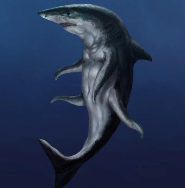 requin10