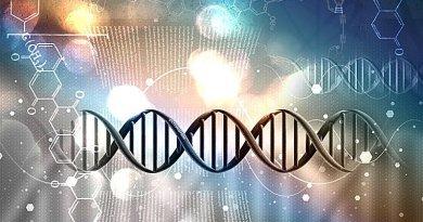 Un conseil Extraterrestre a ensemencé l'Homo sapiens avec 12 branches d'ADN en tant qu'être intelligent