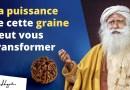 Le Rudraksha : Cette graine vous protègera des énergies négatives | Sadhguru Français