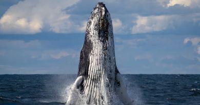 Il est temps de révéler le mensonge au grand jour – Message des baleines