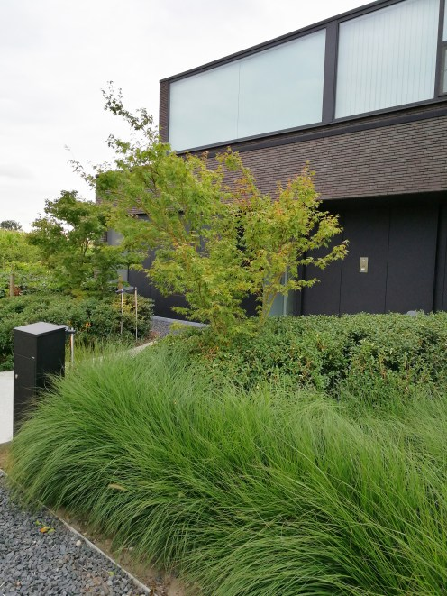Tuinarchitect Geel Evelien Claus strakke tuin