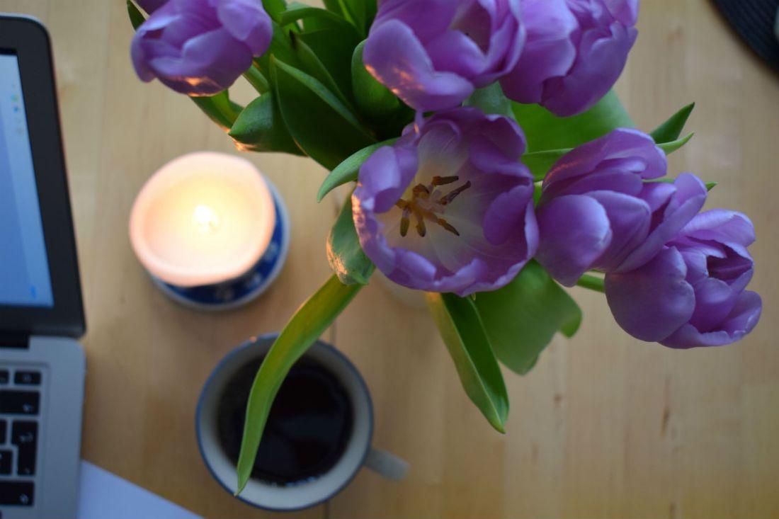 Writer´s Wednesday Tulips
