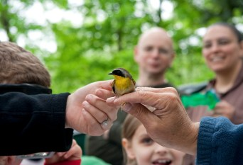 Banding a Common Yellowthroat. North Branch Nature Center, Vermont. © Eve Bernhard. May, 2014