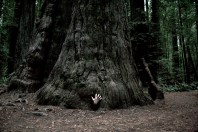Johno Humboldt Redwoods State Park © Eve Bernhard. January, 2014