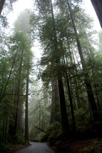 Humboldt Redwoods State Park, California January, 2014