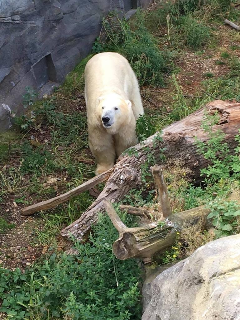Vienna zoo 12