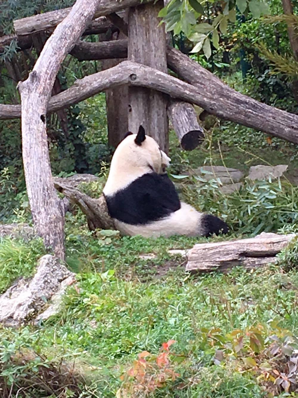 Vienna zoo 7