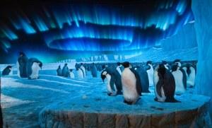 penguin diorama_DF