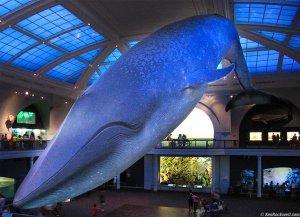IMG_2567-big-blue-whale