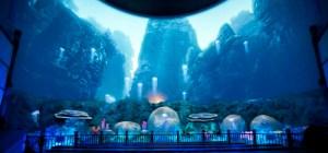 1017201160011typhhontheater_jelly800