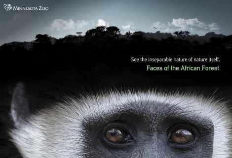 MN-Zoo-Colobus-horizon