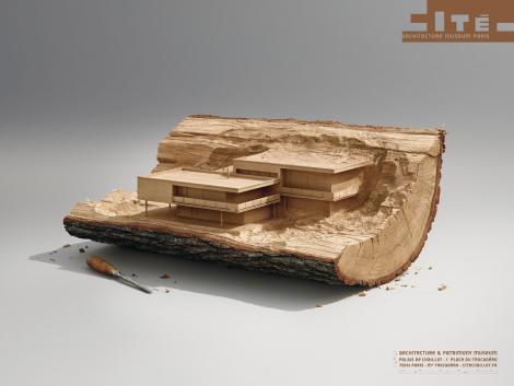wood_aotw