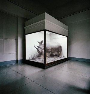Rhino, Field Museum, Chicago, Illinois, USA, 1981