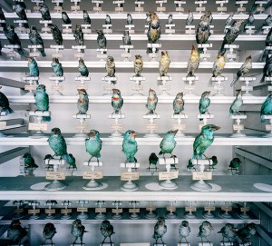 Musem National D'Histoire Naturelle, Paris, 1982