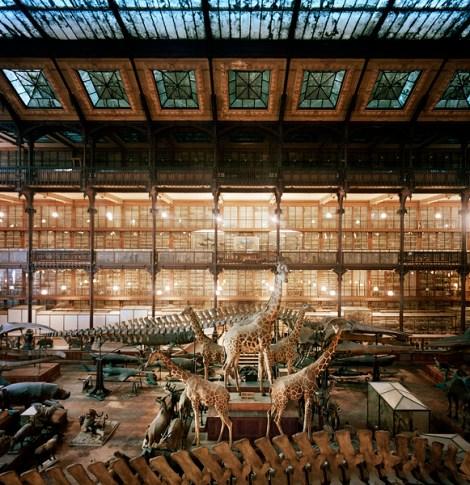 Overview, Museum National D'Histoire Naturelle, Paris, France, 1982