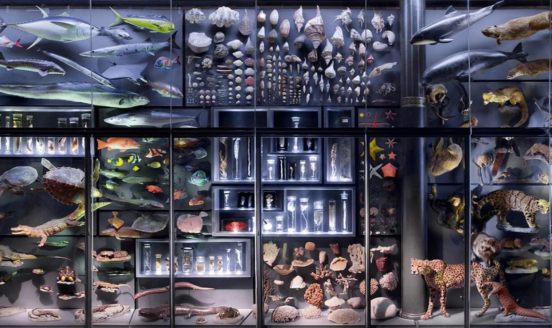 Percepciones sobre los Objetos Auténticos del Museo